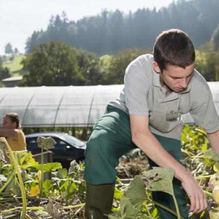 AuftragArbeit wir unterstützen Sie in der Pflege und im Unterhalt Ihres Gartens.